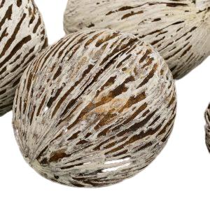 Kule Mintola bielona susz egzotyczny