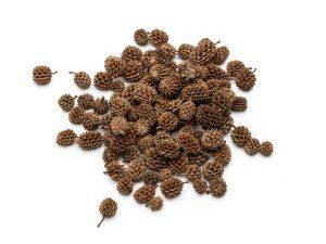 casurina natyralna szyszka susz egzotyczny