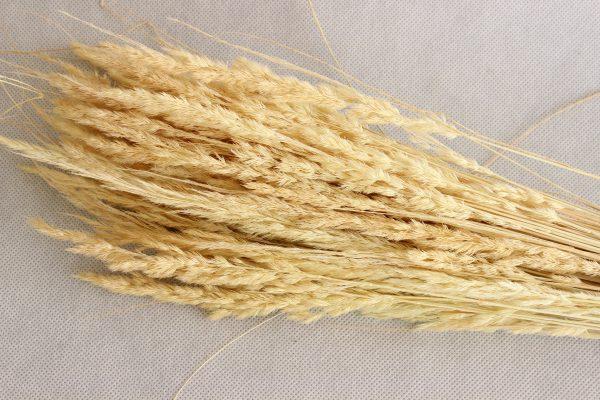 Trawa ozdobna kolor kremowy BOHO bukiet wys 60-66 cm