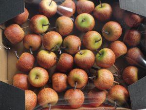 sztuczne jabłka ozdobne